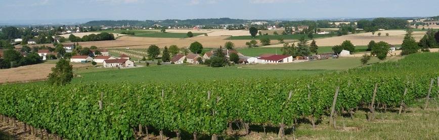A la découverte des vins de Saint-Pourçain